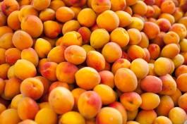 В Калининградскую область не пустили 20 тонн сушёных абрикосов из Турции