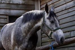 В Калининградскую область не пустили 26 тонн конины из Аргентины