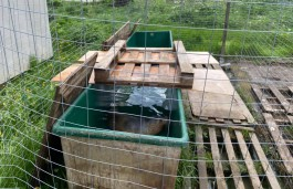 Прокуратура нашла нарушения при содержании тюленей в «Биосфере Балтики»
