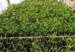 Под кедровый питомник в Зеленоградском округе хотят выделить ещё 11 гектаров земли