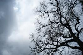 В выходные синоптики прогнозируют в регионе облачную погоду и небольшой дождь