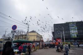 Реконструкцию улицы Баранова в Калининграде планируют начать летом 2018 года