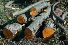 Власти хотят ввести двойную ответственность за вырубку лесов в Калининградской области