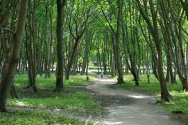 В парке Беккера в Янтарном не убирают аварийные деревья из-за протестов жителей