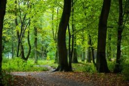 В городском парке Балтийска обнаружили мину времён ВОВ