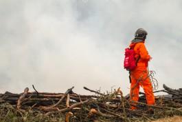 СМИ: Литовец поджигал лес на Куршской косе для удовольствия