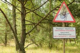 В Калининградской области в 2017 году сократилось число нападений клещей на человека