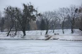 «Там ей будет хорошо»: гигантскую рыбу с набережной Нижнего озера увезли из Калининграда