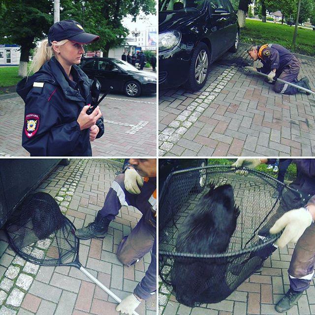 ВКалининграде бобер пытался попасть вторговый центр