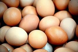 В Калининградскую область не пустили 220 тысяч куриных яиц из Германии