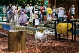«И игровая, и познавательная»: в зоопарке при поддержке «Автотора» открылась контактная площадка