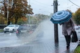 В выходные синоптики прогнозируют в Калининградской области дожди