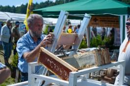 Власти: На долю региона приходится треть всего мёда, который производят в СЗФО