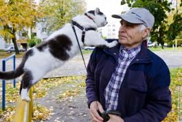 «Потеряли члена семьи»: в Калининграде умер знаменитый кот Лёва