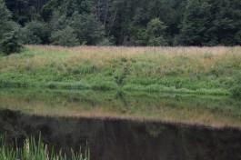 Трое мужчин незаконно переплыли по реке Шешупе из Калининградской области в Литву