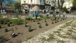 В центре Калининграда появятся два розария