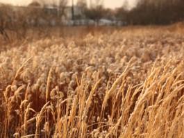 Под Гусевом в поле загорелся трактор стоимостью несколько миллионов рублей