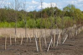 На территории стадиона «Спартак» в Калининграде планируют высадить 700 деревьев и кустарников