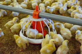 В Калининградской области построят завод по переработке яиц