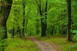 За год в Калининградской области высадили 600 тысяч деревьев ценных пород