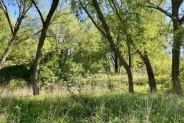 Почти 200 гектаров земли в Калининграде переводят в зелёные зоны