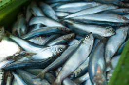 В Калининградской области начали строить рыбопромысловое судно