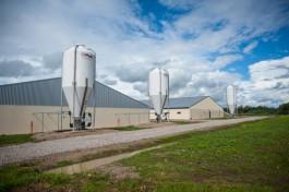 «3600 свиноматок»: в Черняховском округе построили поросячью ферму