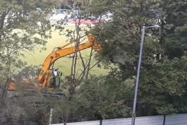 В Южном парке в Калининграде «вырубают» деревья ковшом экскаватора