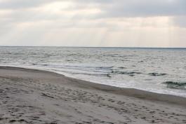 На побережье Калининградской области нашли четырёх мёртвых тюленей