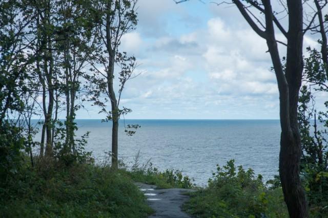 После обращения жителей власти отказались от застройки десяти гектаров леса на побережье в Отрадном