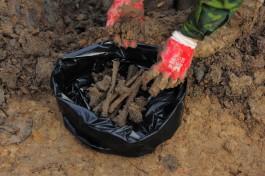 При строительстве дома на улице Донского в Калининграде нашли человеческие останки