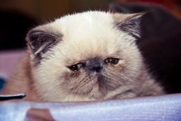 В Калининграде у любительницы кошек украли сумку с кошельком