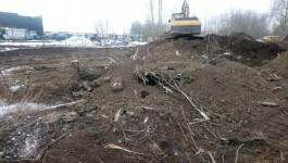 Мэрия: На Московском проспекте в Калининграде незаконно вырубили десятки деревьев