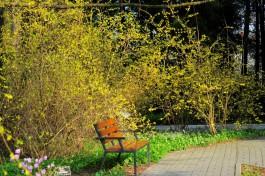 Власти Ладушкина выделили 12,3 млн рублей на благоустройство парка миниатюр с деревянным променадом