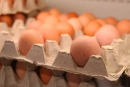 В Калининградскую область не пустили партию куриных яиц из Нидерландов