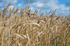 В Литве объявили экстремальную ситуацию из-за засухи