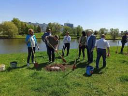«Сначала целуем»: на берегу Нижнего озера в Калининграде высадили необычные деревья