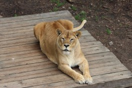 Калининградский зоопарк запустил онлайн-трансляции из вольеров животных