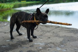 Жительница региона засудила хозяина собаки за нападение на ребёнка