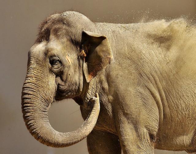 Самовывоз: Калининградский зоопарк предлагает всем желающим экскременты слонов ибизонов