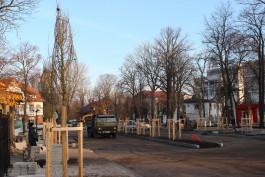 Возле вокзала в Зеленоградске начали высаживать семиметровые деревья из немецкого питомника