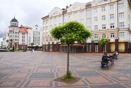 «Кёнигсберг в деталях»: где находился первый дом Кёте Кольвиц