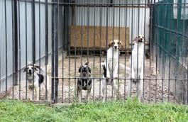 Оргеева: После ЧМ-2018 приюты для животных в Калининграде продолжат работу