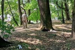 «Голая земля, бутылки и граффити на деревьях»: как выглядит будущий парк за башней Врангеля