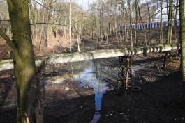 «Порубленные планы»: какие зелёные зоны Калининграда решили спасти от застройки