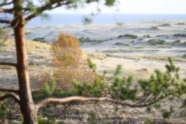 На Куршской косе завершили работы по берегоукреплению