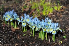 «Буйство красок»: в Ботаническом саду Калининграда начали распускаться первые цветы