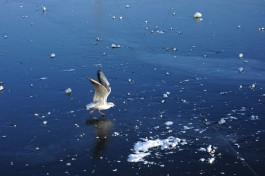 Власти Неринги хотят упростить порядок езды по льду Куршского залива на квадроциклах