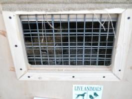 Трёхмесячный львёнок из Калининградского зоопарка переехал в Пермь