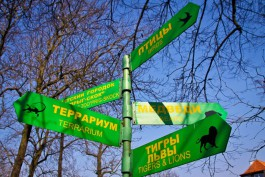 В калининградский зоопарк хотят привезти антилоп